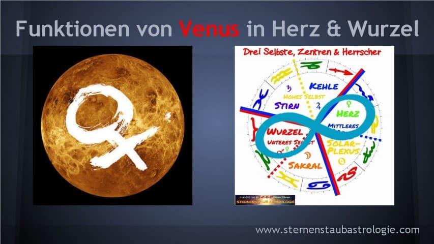 Funktionen von Venus Herz Wurzel