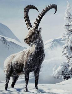 Horoskop 2019 Steinbock kalt